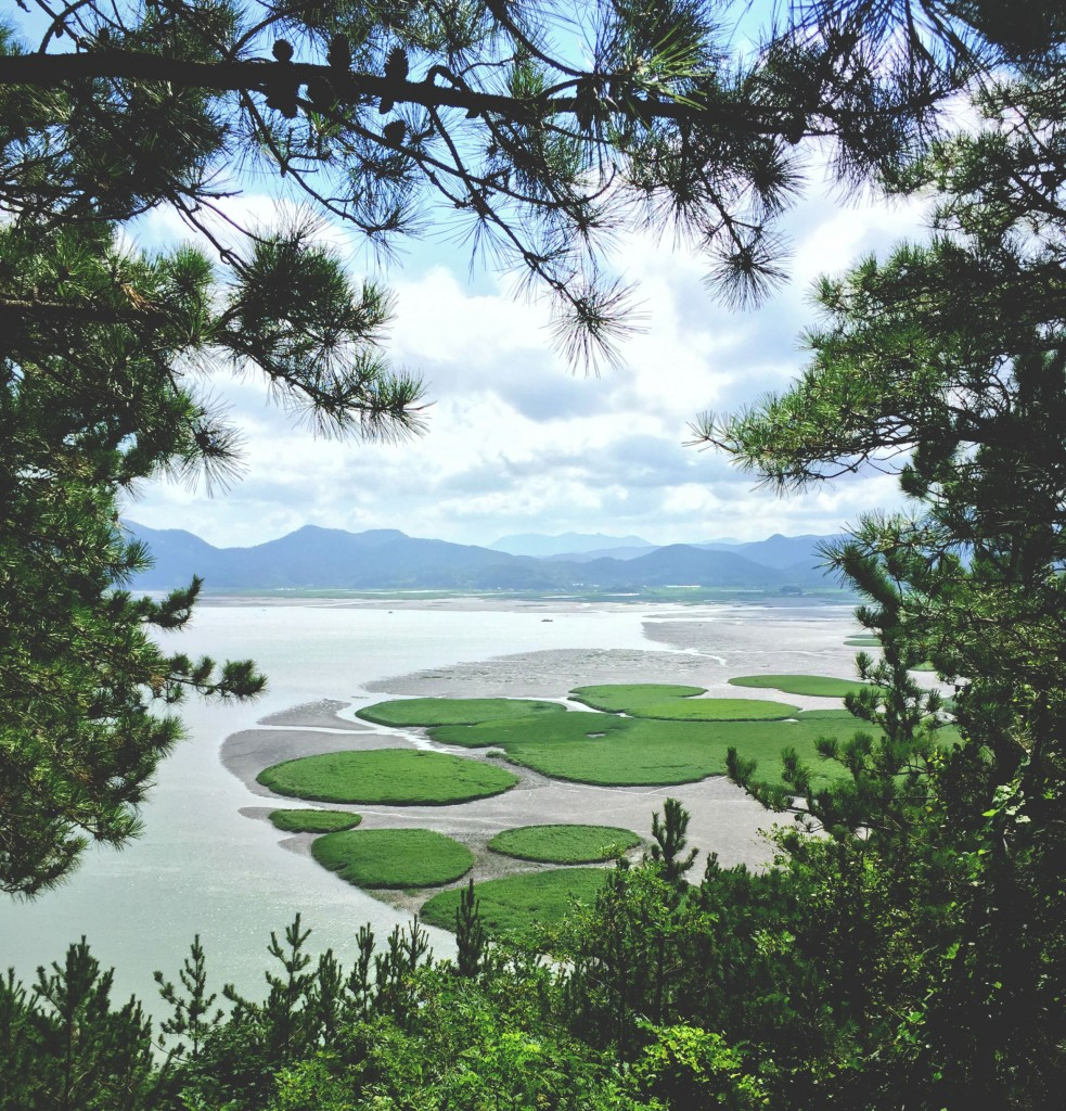 suncheon-bay