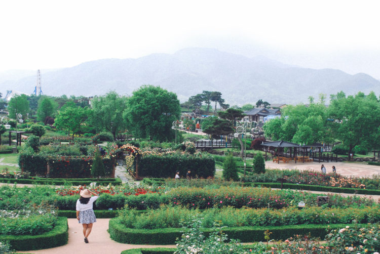 Check out this beautiful festival in Korea! Come May Gokseong is home to a gorgeous rose festival.
